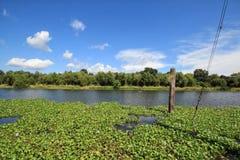 Bayou Lafourche, Louisiana stockbilder