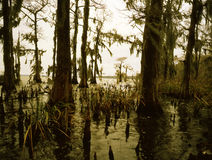 Bayou méridional Photo stock