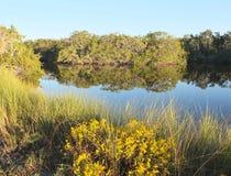 Bayou. Sanibel Island Wildlife Presever Bayou Stock Photography