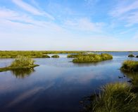 Bayou Sauvage Royalty Free Stock Photography
