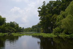 Bayou Stock Photo