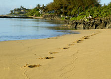 Bayside footprints at Dawn Royalty Free Stock Photography