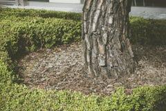 Baza drzewo na trawie obraz stock