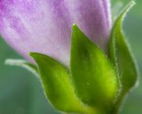 Baza kwiat zdjęcie royalty free