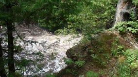 Baza mała siklawa w lesie zdjęcie wideo