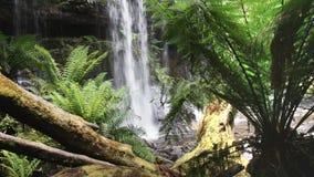 Baza Russell spada w Tasmania, Australia zbiory wideo