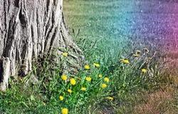 Baza stary drzewo otaczający Dandelions w wczesnej wiośnie Abstrakcjonistyczni tęcza kolory dodający obraz royalty free