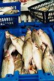 Bazaar in the fishing row Stock Photography