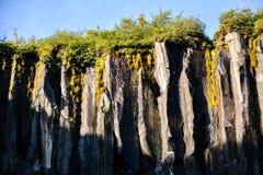 Bazaltowe kolumny Svartifoss siklawa, Iceland w lecie zdjęcia stock