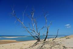 Bazaturo Island. Sandy shores of Bazaruto Island, Mozambique Royalty Free Stock Photos
