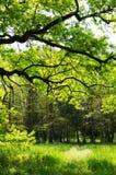 Bazos dendrological park Royalty Free Stock Photos