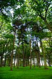 Bbeautiful Green Forest in Summer Royalty Free Stock Photo