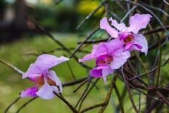 Bbeautiful orkidé Arkivbild
