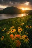 BBlack musterte Susans, schwermütigen Sonnenuntergang, Appalachen stockfoto