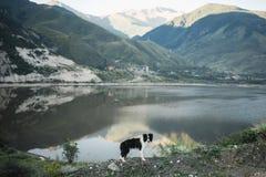 Bborder collie obsiadanie na blefie przegapia Jeziornego Gromadzkiego parka narodowego obrazy royalty free