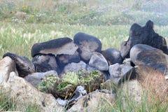 BBQ στις αγκινάρες άγριας φύσης Στοκ Εικόνες