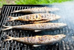 BBQ Royalty Free Stock Images