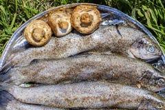 BBQ fresco 3 del pesce della trota Fotografia Stock Libera da Diritti