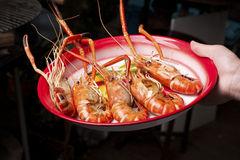 BBQ Grilled Prawns Stock Photos