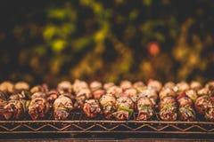 BBQ Shish kebab fotografia stock