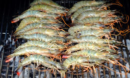 BBQ shrimp. Large prawns, or shrimp, cooking on a BBQ Royalty Free Stock Photo