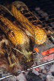 Bbq sweetcorn with leaves Royalty Free Stock Images
