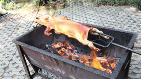 BBQ young age Pig on stove fire, Chief cooker put 20 days Pork. On oven brush oil on skin to make crispy surface scorched burn delivery at home of customer stock video