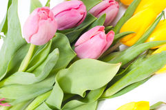 Bbunch of flowers Stock Images