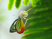 BButterfly Stock Photography