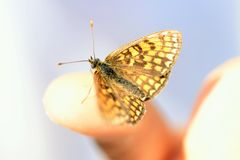 Bbutterfly on the finger Royalty Free Stock Photos
