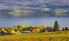 BC俯视欧肯纳根湖基隆拿加拿大的葡萄园 库存照片