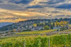 BC俯视欧肯纳根湖基隆拿加拿大的葡萄园 免版税图库摄影