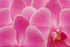 Bckground da orquídea Fotos de Stock Royalty Free