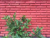 bckgroundtegelstenar planlägger den röda väggen arkivfoto