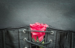 Bdsm gothic fetish sexy  corset with rose. Bdsm gothic fetish sexy corset with rose fetish bdsm background Stock Photography