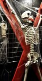 BDSM Skeleton Royalty Free Stock Image