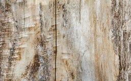 Beżowa drewniana tekstura, topola, tło Zdjęcie Stock