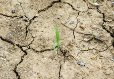 Be arid ground Stock Images
