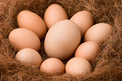 Be bigger among others. One big egg between the smaller ones in nest Stock Photo