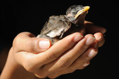 Be carefull wild animal life on hand Stock Image