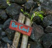 Be Cool Stock Photos
