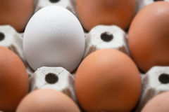Be different. Close up of white egg surrounded by brown eggs in Royalty Free Stock Image