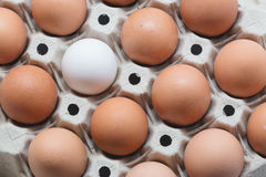 Be different. One white egg surrounded by brown eggs in a box. T Stock Photography
