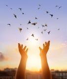 Be för kvinna och fri fågel som tycker om naturen på solnedgångbakgrund Royaltyfri Bild