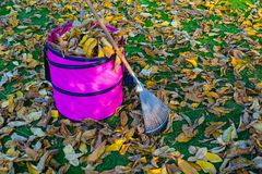 Fall foliage gardening, raking leaves royalty free stock photography