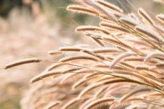 Grass light Cheerfulness sunshine. Be happy everywhere grass light sunshine stock photo