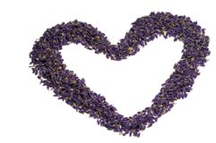 Be my valentine. Shape of the heart, made out of very small blossoms of lavender. Isolated on white background Stock Photo