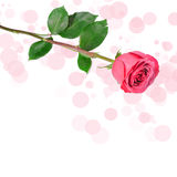 Be my valentine card. With one red rose Stock Photos