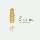 Be organic vector logo. Flat style logotype template with wheat and roots. Easy to use business template. Logo for organic products, bakery, etc Royalty Free Stock Photography