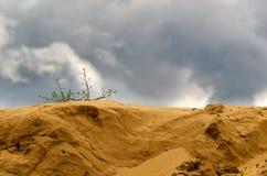 Be single bush of grass on a sandy barkhan. Stock Photos
